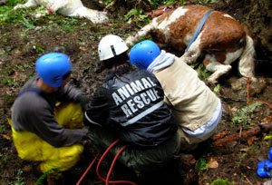 technical animal rescue courses in washington and the northwest animal rescue 300x204